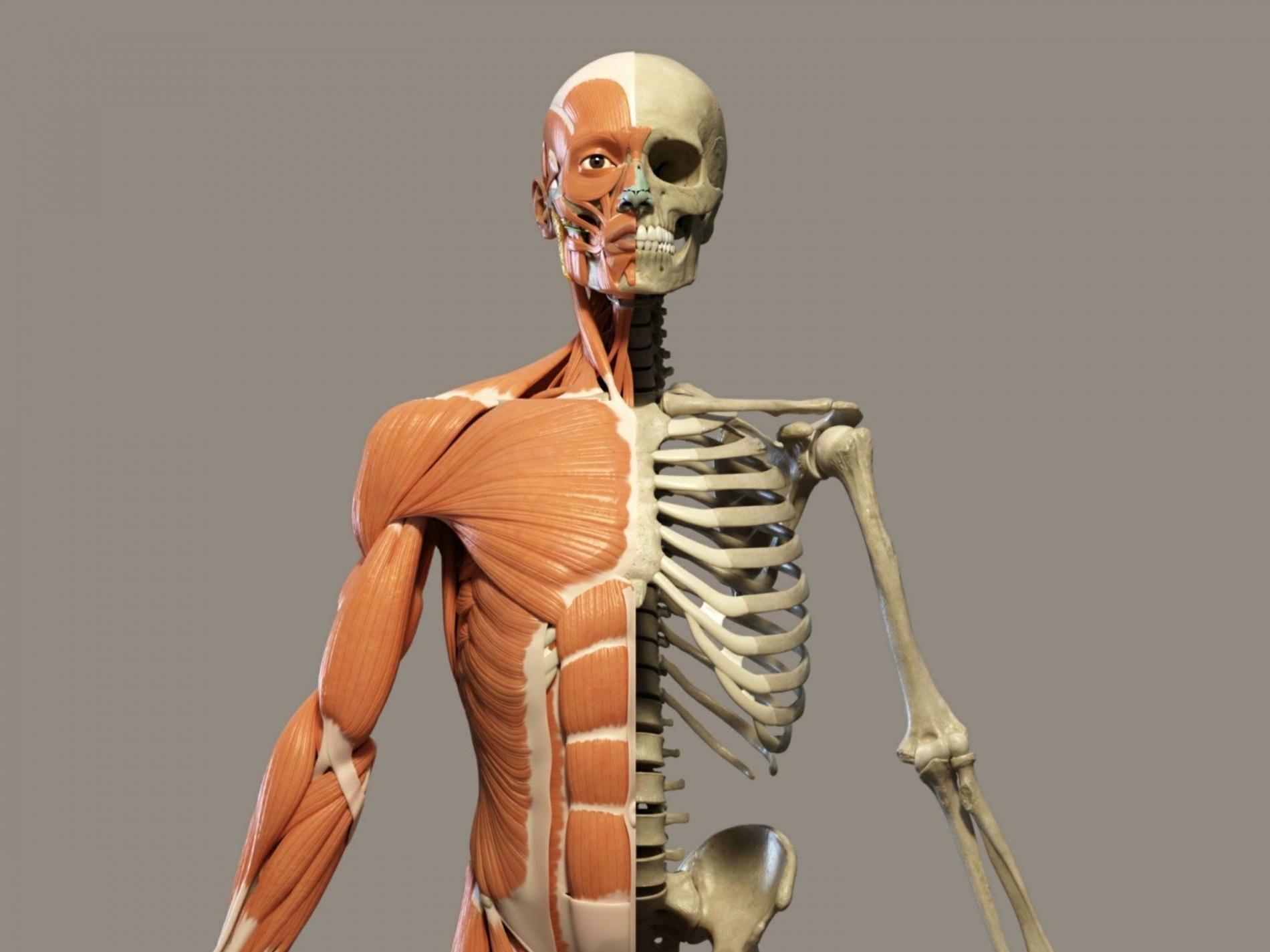 кости человека